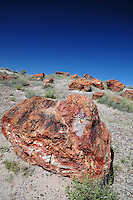 Navajo County, Arizona – Pieces of colorful petrified wood at the Giants Logs trail of the park. The Petrified Forest National Park in northeastern Arizona remains one of the most popular attractions in the United States. The park attracts thousands of visitors a year for the large amount of petrified wood sediments from ancient trees. Photo by Eduardo Barraza © 2014