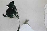 A cute, small black dog looks up at his owner while walking along the shore of a beach.