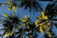 Oroluk Atoll, Palm coverd small Atoll. within Micronesia, Pacific, only about 10 or so Melanasians live here