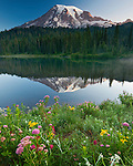 Summer flowers and still waters complete what is perhaps Mt. Rainier's most iconic scene viewed from Reflection Lakes. These two jewel-like lakes are situated on a small plateau directly south of Paradise.