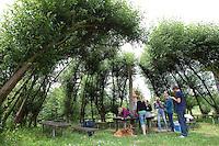 Picknick-Platz, Sitzplatz, Hütte,  aus Weidenzweigen, Weidenstecklingen, Zweige von Weide wurden in die Erde gesteckt und sind angewachsen und wurden zu einer Hütte geformt und verflochten, Kopfweide, Kopfweiden, Kopf-Weide, Salix spec.,