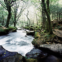 Golitha Falls on the River Fowey on Bodmin Moor in Cornwall..