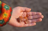 Bernstein am Strand, im Sand, Kinderhand mit im Spülsaum gefundenem Bernstein, Bern-Stein, fossiles  Baumharz, amber