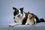 Border Collie with a rat terrier Shopping cart has 3 Tabs:<br />