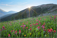 One of these days I'll write a blog about my favorite locations to photograph Colorado wildflowers amid sweeping landscapes. In the top 5 on that list would be a not-as-well known area (except to locals) close to Berthoud Pass called Butler Gulch (actually closer to Empire than Winter Park). In the summer of 2014 the colors were the best I'd seen - and I'd visited the iconic Colorado locations like American Basin near Lake City and Yankee Boy Basin near Ouray earlier in the summer. I imagine the landscapes near Crested Butte were excellent this summer, but I hit that location a bit early.<br /> <br /> This Colorado wildflower image comes from Butler Gulch early one morning as the sun peeked over the ridge. The paintbrush were plentiful and the it seemed the morning was nearly perfect.<br /> <br /> Butler Gulch is popular for snow-shoers in the winter and folks with dogs in the summer, and is located on Highway 40 past the town of Berthoud Falls. The turnoff is at the first switchback just before you start the climb up Berthoud Pass. Turn left before the first switchback. You'll follow the road past the Big Bend picnic area a few miles before eventually turning onto an easy dirt road (you'll have to turn right because you'll encounter a gate - if you go straight that is restricted access - I think it is a mine). After another mile or so the road will split with the right branch heading uphill. Go left and you will reach a parking area in ~100 yards. Park, walk past by the gate on an old jeep road, and start hiking as the road makes a sweeping left curve before starting a gradual ascent. The trail to the best meadows for wildflowers is just over two miles and about 1000 vertical feet . There are parts of this hike that become a grunt but nothing too bad. The most treacherous portions of this hike are a few water crossings that require short traverses over trees laid across the water. Even these parts are not too difficult, but crossing in the dark can be a bit sketchy