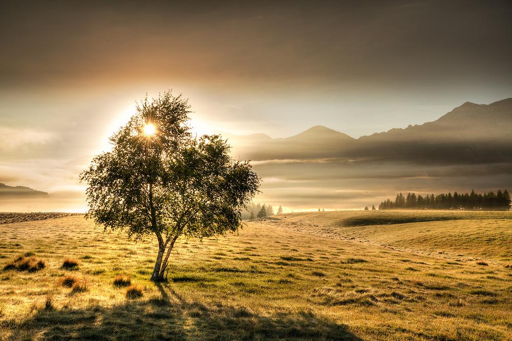 Sunrise through a lone silver birch tree. Castle Hill New Zealand