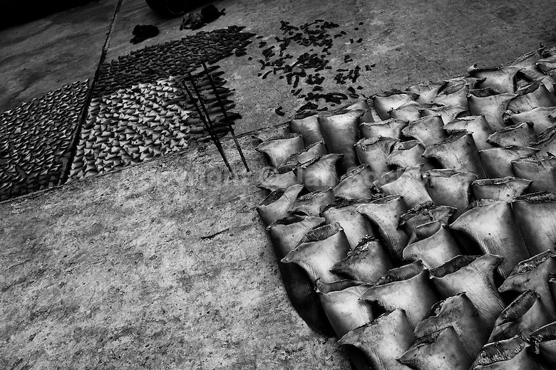 shark extinction shark finning essay Shark finning shark fins are now among the most expensive seafood products in the world, whereas the shark meat is often of low value, depending on the species the disparity in value between fins and meat has led to the horrific practice of shark finning.