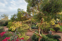 "The beautiful gardens of the ""Sails in the Desert"" hotel at Yulara, near Uluru"