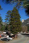 FB-S149 Idyllwild, CA. 4x6 postcard.  Town.