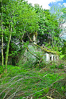 Derelict traditional period old stone cottage overgrown and in need of renovation at Tallow, County Waterford, Ireland