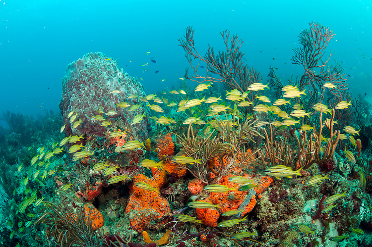 Tropical reef fish gather on the breakers coral reef for Florida tropical fish