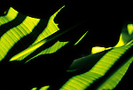 close-up of a banana tree leaves