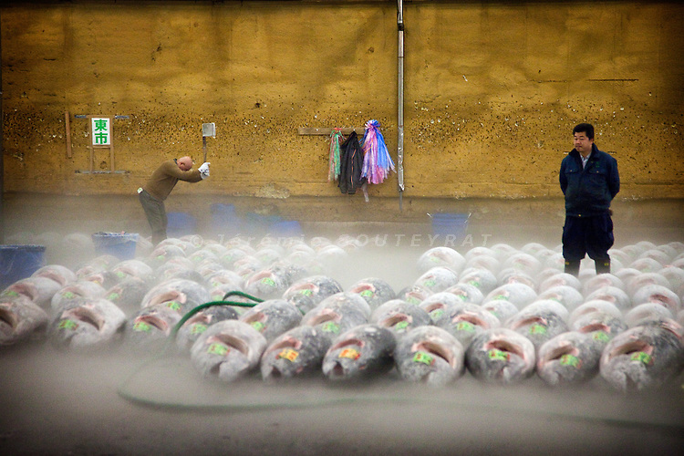 Tokyo, 1st of March 2010 - Tuna at Tsukiji wholesale fish market, biggest fish market in the world. 3:45 a.m, frozen tunas are getting ready for the auctions. A part of their tail is cut with an axe to be scutinized before the auctions.