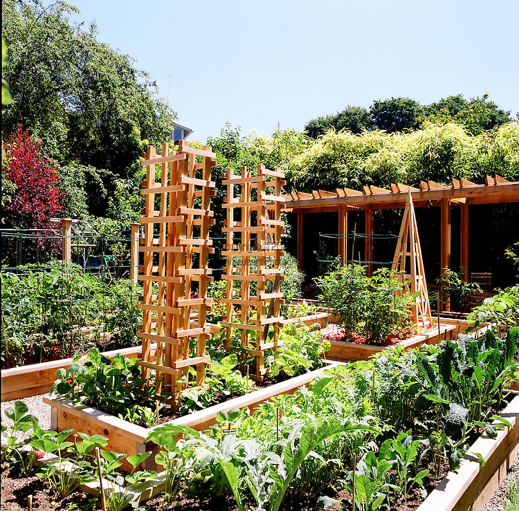 Trellis planting commercial travel photographer susan for Beautiful vegetable garden designs