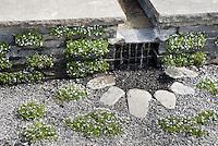 Rain garden, irrigation via overflow water