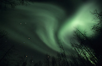 The aurora borealis, or northern lights, dance above a forested hillside near Fairbanks, Alaska.