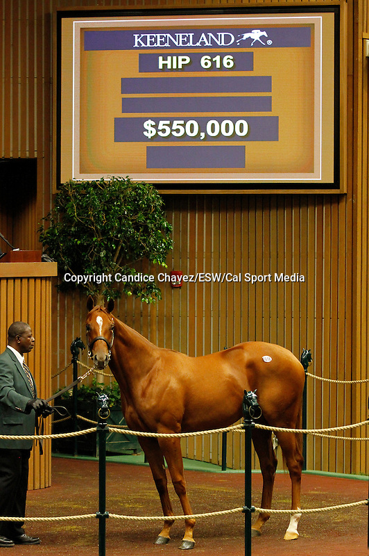 September 16, 2015: Hip 616 Tapit - Cindy With An S filly consigned by Gainesway.  Candice Chavez/ESW/CSM