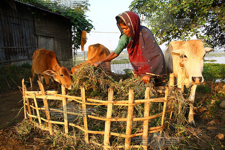 A woman in Birani Bazaar with the cows she was able to buy with the help of a microfinance loan from IFAD (International Fund for Agricultural Development).