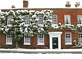 Snow settled on a large climber, Petworth, Sussex.