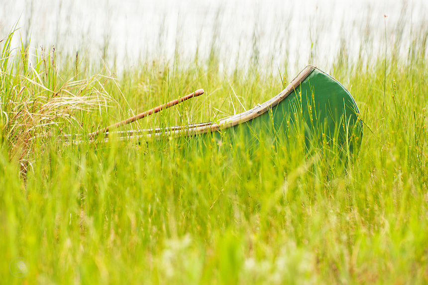 A traditional wood and canvass Canadian canoe pulled up on the reedy shore of Lake Huron.