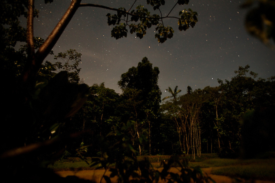 Iquitos, Peru, September 13, 2013 - A view of the jungle, taken at night using only moon light over a long exposure.