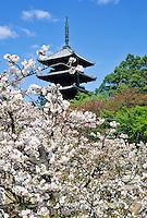 Ninnaji Temple garden  Kyoto photos