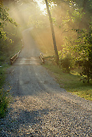 Rays of sun shine through trees in afternoon mist in summer onto gravel road with wooden bridge