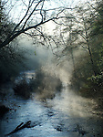 San Lorenzo River in Henry Cowell Redwoods State Park
