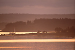 A sailboat on Machias Bay at sunset, Maine.