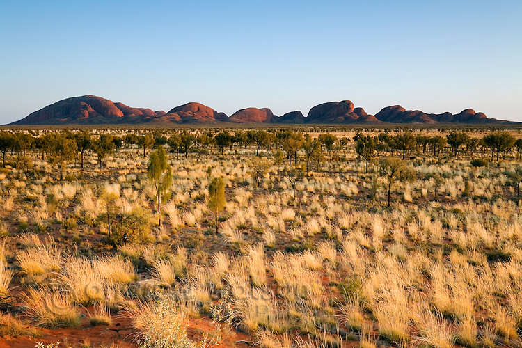 View across the spinifex plains to Kata Tjuta (The Olgas).  Uluru-Kata Tjuta National Park, Northern Territory, AUSTRALIA.