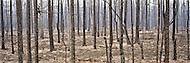 Wildfire burn in Central Yukon