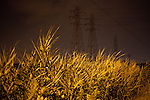 Weeds on the side of the road are illuminated by a street light in Buffalo, NY, on Wednesday, July 29, 2009.