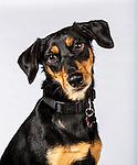 20120813 Animal Humane Selects