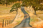Hills and trees, fences and roads in rural Amador County, Calif. (Grelich Road)