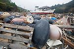 Damaged fishing vessels, buoys and other fisheries apparatus lie among the debris  at Kyubun on the Oshika Peninsula, Miyagi Prefecture, Japan on 31 May, 2011..Photographer: Robert Gilhooly