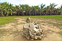 Tree stump and palms, at the Afia Beach Hotel.