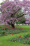 Tuileries Gardens (Jardin des Tuileries) in spring, Paris, France, Europe