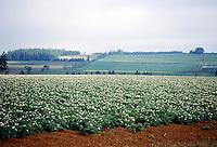 AGRICULTURE<br /> Potato Field