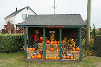 Roadside pumpkin stand in Ladner, British Columbia, Canada