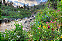 This small stream runs down from Mount Sneffels through Yankee Boy Basin, giving life to an abundance of Colorado wildflowers. From paintbrush to sunflowers to lupine, the colors were varied and amazing. This Colorado wildflower image looks up at the highest peaks in the area, and while these high altitude wildflowers are a bit different from Texas wildflowers, they can still put on quite a show.