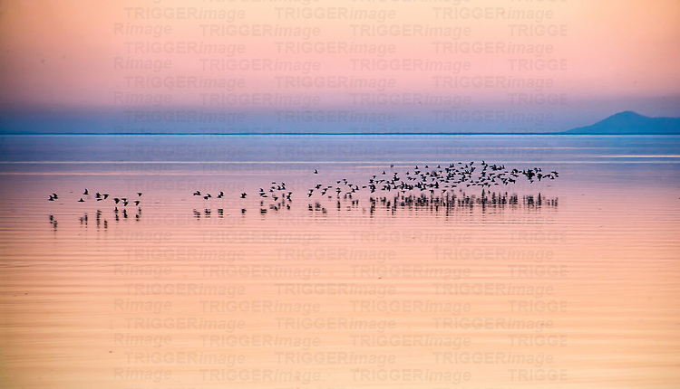 Peaceful view across lake with a flock of birds and dramatic reflection of sky in still waters