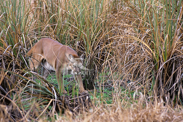 puma sawgrass
