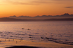 Dramatic sunset over Puget Sound and Olympic Mountain Range with kayakers on water off Alki Seattle Washington State USA
