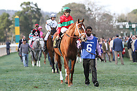 HOT SPRINGS, AR - March 18: Malagasy #6 walks in the infield saddling paddock prior to winning the Rebel Stakes (Gr.2) at Oaklawn Park on March 18, 2017 in Hot Springs, AR. (Photo by Ciara Bowen/Eclipse Sportswire/Getty Images)