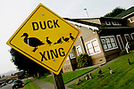 Duck crossing signs for the popular ducks of Scotia are scattered throughout town. The town of Scotia in Northern California is a company town owned by the Pacific Lumber Company (PALCO), but that will change as the company will begin to sell the town. (Photo by Max Whittaker for The New York Times)<br />