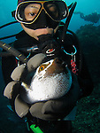 Orchid Island, Taiwan -- Taiwanese diver squeezing a pufferfish.<br />