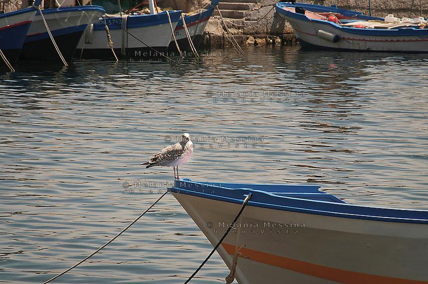 Seagull in Mondello harbor<br /> Gabbiano nel porticciolo di Mondello