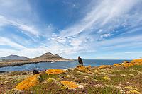 Striated caracara, phalcoboenus australison, Falkland Islands
