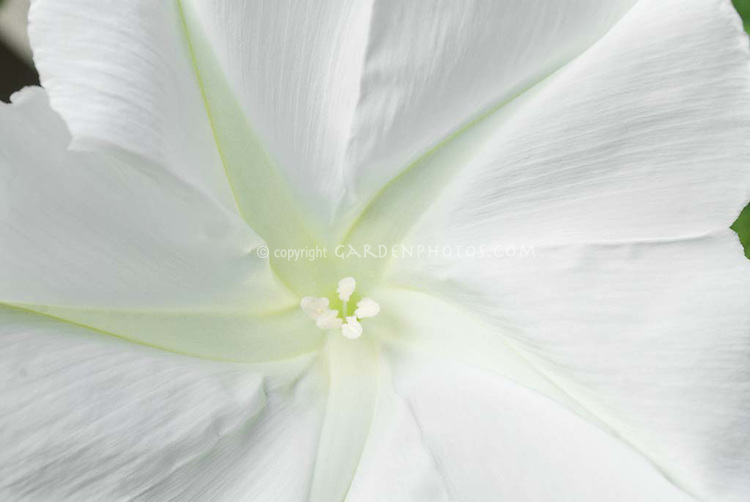 white flower  flower, Beautiful flower