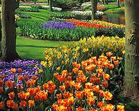 Spring Tulips & Wildflowers, Kuenkenhof Gardens, Netherlands   Also daffodils, hyacinths, narcissi  Seventy square acre garden near Amsterdam